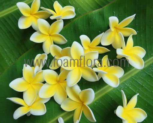 Plumeria hair clip with flower