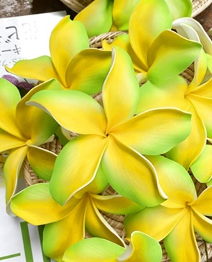 plumeria 205 green yellow